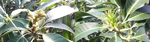 mango-2009-12-17.jpg