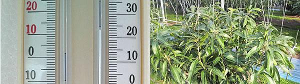 mango-2009-12-18.jpg
