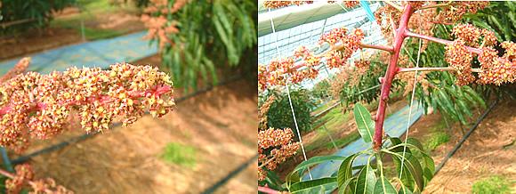 mango-2009-2-15-2.jpg