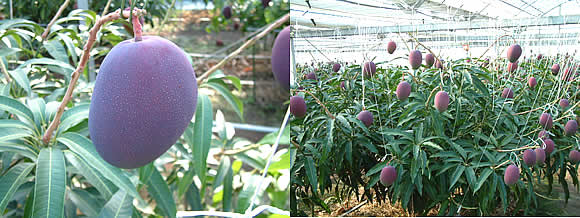 mango-2009-5-7.jpg