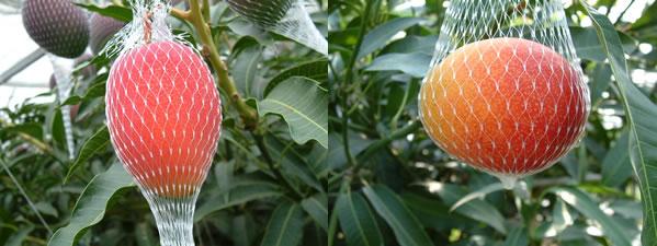 mango-blog11-1.jpg